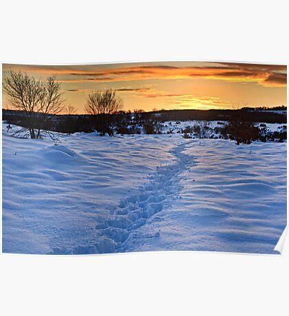 Winter Sunset, Waldridge Country Park, Durham. UK Poster