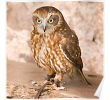 Owl at Exmoor Falconry Poster