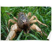 Hi I'm Spike: Burrowing Crayfish (Engaeus hemicirratulus)  Poster