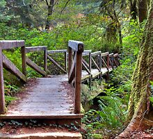Redwood forest trail bridge by David Owens