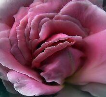 A Delicate Beauty by Carla Jensen