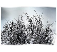 Bushes in Winter Series - 2 Poster