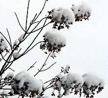 Bushes in Winter Series - 4 by Debbie Pinard