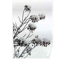 Bushes in Winter Series - 4 Poster