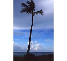 Lonely Palm Tree Photographic Print