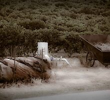 winery  by Johnny Rizk