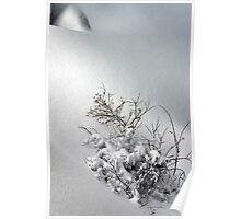 Bushes in Winter Series - 7 Poster