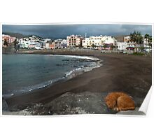 Beach cat Poster