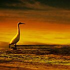 Egret on Chesil Beach, Portland, Dorset, UK by buttonpresser