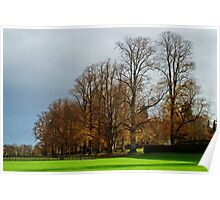 Tree-Lined Avenue Poster