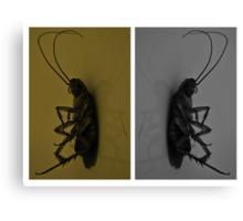 Cockroach..!! Canvas Print