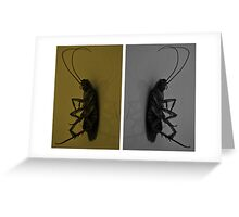 Cockroach..!! Greeting Card