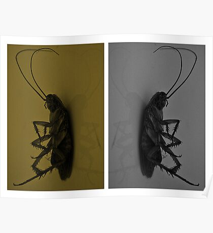 Cockroach..!! Poster