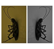 Cockroach..!! Photographic Print