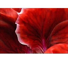 Geranium Red Abstract Photographic Print