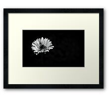 Lonely Flower. Framed Print