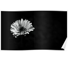 Lonely Flower. Poster