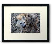 Young Hyena Framed Print