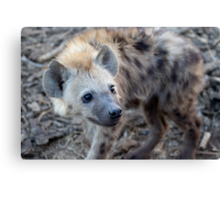 Young Hyena Canvas Print