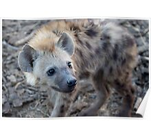Young Hyena Poster