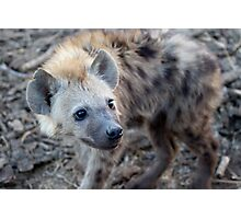 Young Hyena Photographic Print