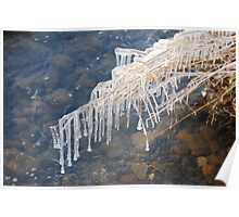 Frozen Reeds at the river Poster