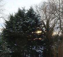 Sun, Snow and Trees by Claire Elford