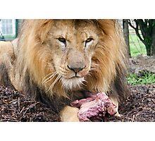 Big Cat. Photographic Print