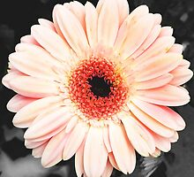 Light pink flower (selective color) by liyanna