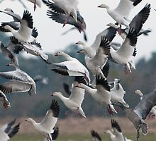 Wild Goose Chase by Bonnie T.  Barry