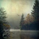 Land of the raptor... Loch Ard, Trossachs by David Mould