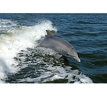 Cool Bottlenose Dolphin Photographic Print