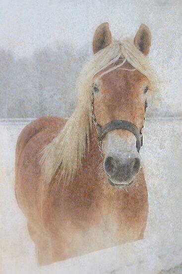 Winter Horse  - JUSTART © by JUSTART