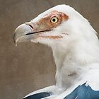 The Palm-nut Vulture by Elaine123
