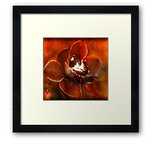 Orchid Series #3 Framed Print
