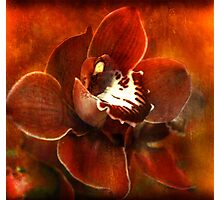 Orchid Series #3 Photographic Print