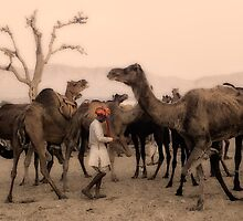 India: A day in the life of the Pushkar Camel Fair by Neville Bulsara