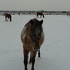 Peel Horses in Winter 3 by liesbeth