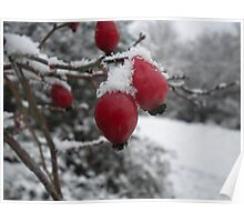 Red Berries with Crisp Snowflakes Poster