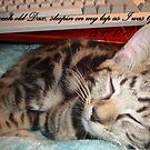 MY KITTY DAX, WAS SLEEPING ON MY LAP WHEN I WAS TYPING by Sherri Palm Springs  Nicholas