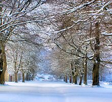 Avenue of trees by Cat Perkinton