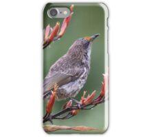 Little Wattle Bird iPhone Case/Skin