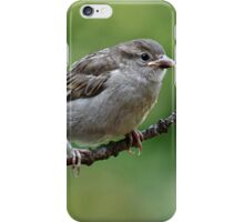 Fledgling house sparrows iPhone Case/Skin
