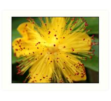 Spectacular Yellow Art Print