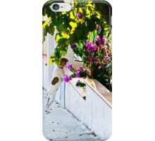 Dog staring at flowers iPhone Case/Skin