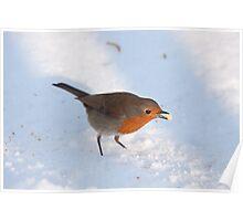 Winter Robin Poster