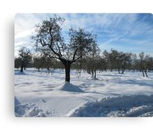 snow in country side(Tuscany/italy) Canvas Print