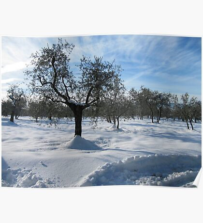 snow in country side(Tuscany/italy) Poster