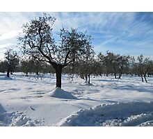 snow in country side(Tuscany/italy) Photographic Print