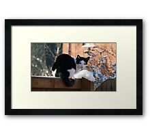 But it's cold... Framed Print